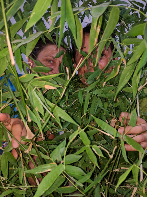 Bambooing