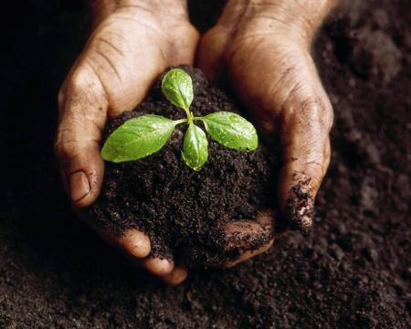 Grow It Bio