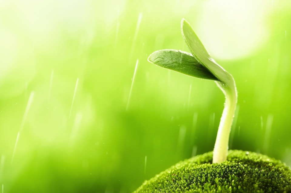 Sprout in the rain
